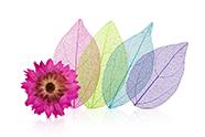 Jolifin Blumen