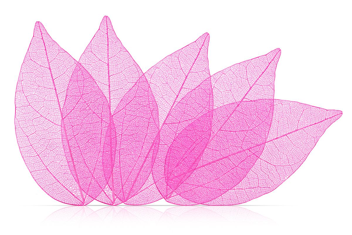 Jolifin Skelettblätter neon pink