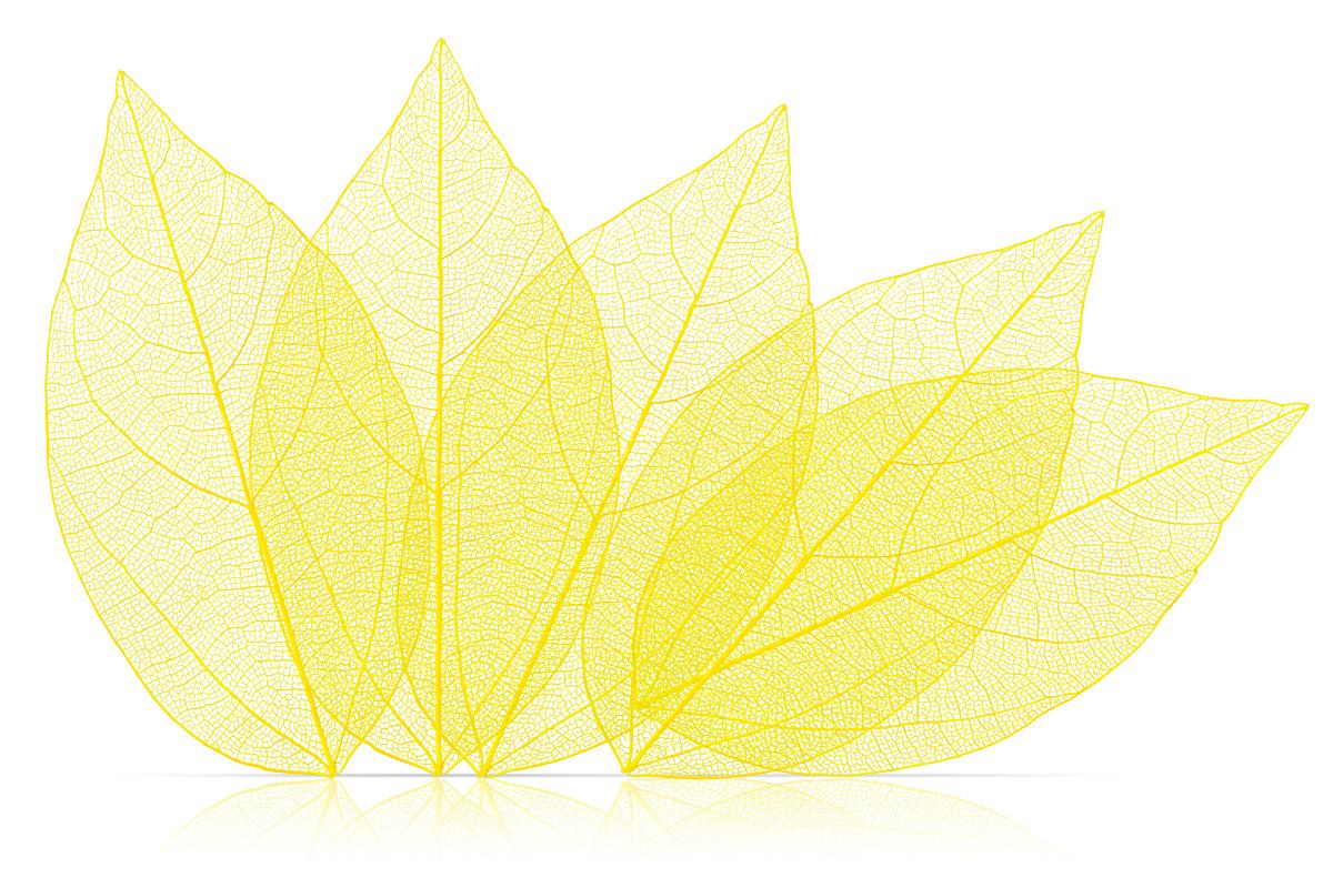Jolifin Skelettblätter yellow