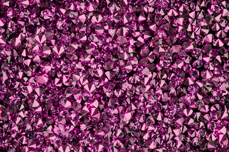 Jolifin LAVENI Luxury Diamonds - fuchsia