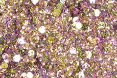 Jolifin LAVENI Sparkle Glitter - rosy-prosecco