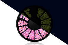 Jolifin LAVENI Strass-Display - Nightshine candy pink