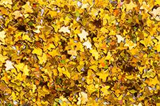 Jolifin Glitter Butterfly gold