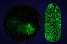 Jolifin LAVENI Nightshine Glitter - glossy neon-green