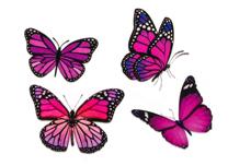Jolifin Flora Nailart Tattoo Nr. 22