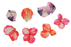 Jolifin LAVENI XL Sticker - Flowers Nr. 4