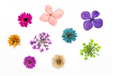 Jolifin XL Nailart-Display - Dried Flowers Nr. 5