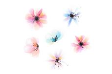 Jolifin Flora Tattoo -  Nr. 39