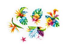 Jolifin Tropical Tattoo Nr. 33