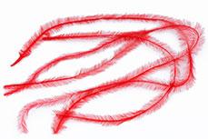 Jolifin Nailart Feder red