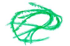 Jolifin Nailart Feder green