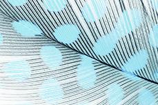 Jolifin Nailart Feder blue leopard