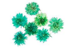 Jolifin dry flower mint cornflower