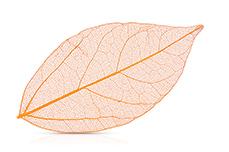 Jolifin Skelettblätter orange