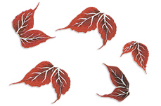 Jolifin Trend Tattoo - Herbst 4